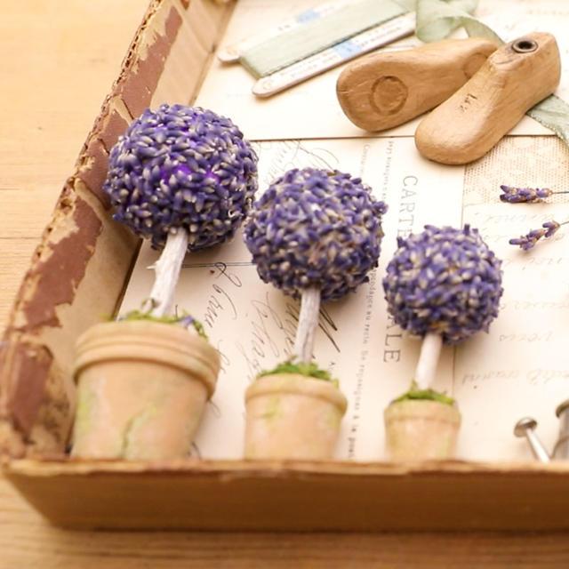 06 lavender square 01