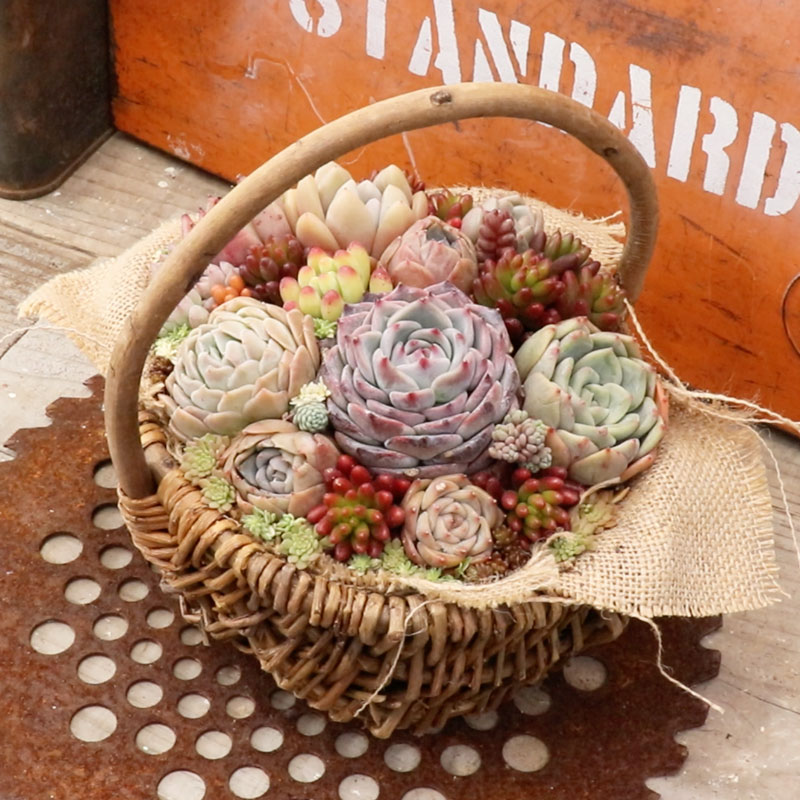 Succulent Basket Arrangement