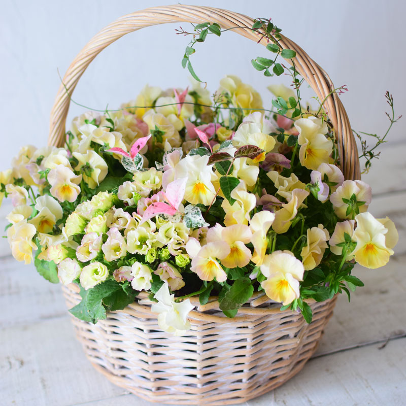 Fluffy Flower Basket -Beginners-