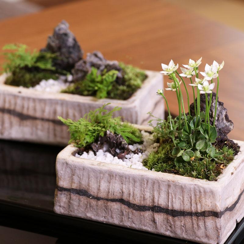 盆栽の楽しみ方