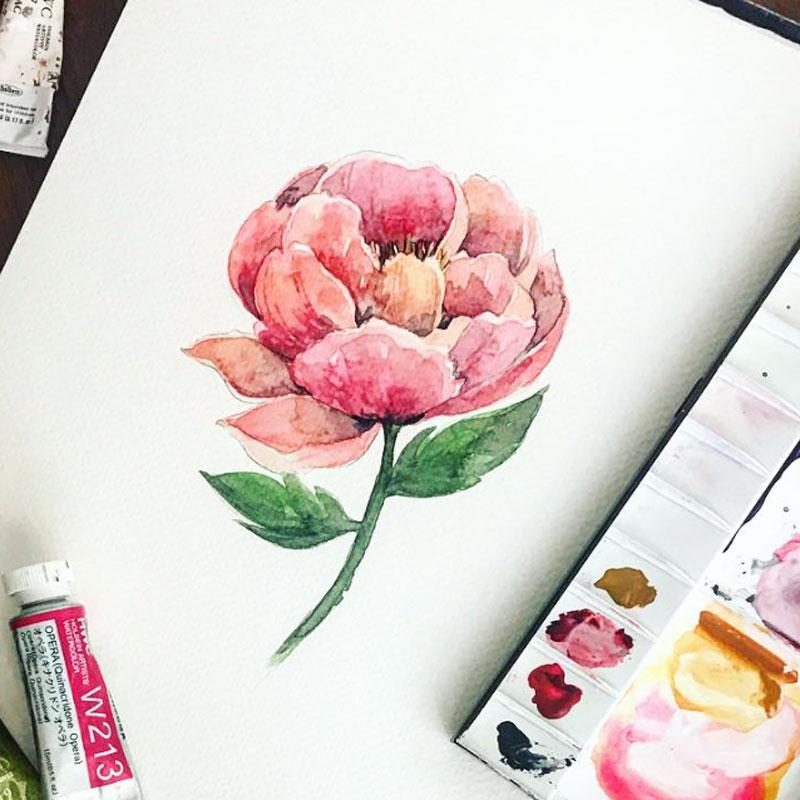 ピンクシャクヤクの水彩画