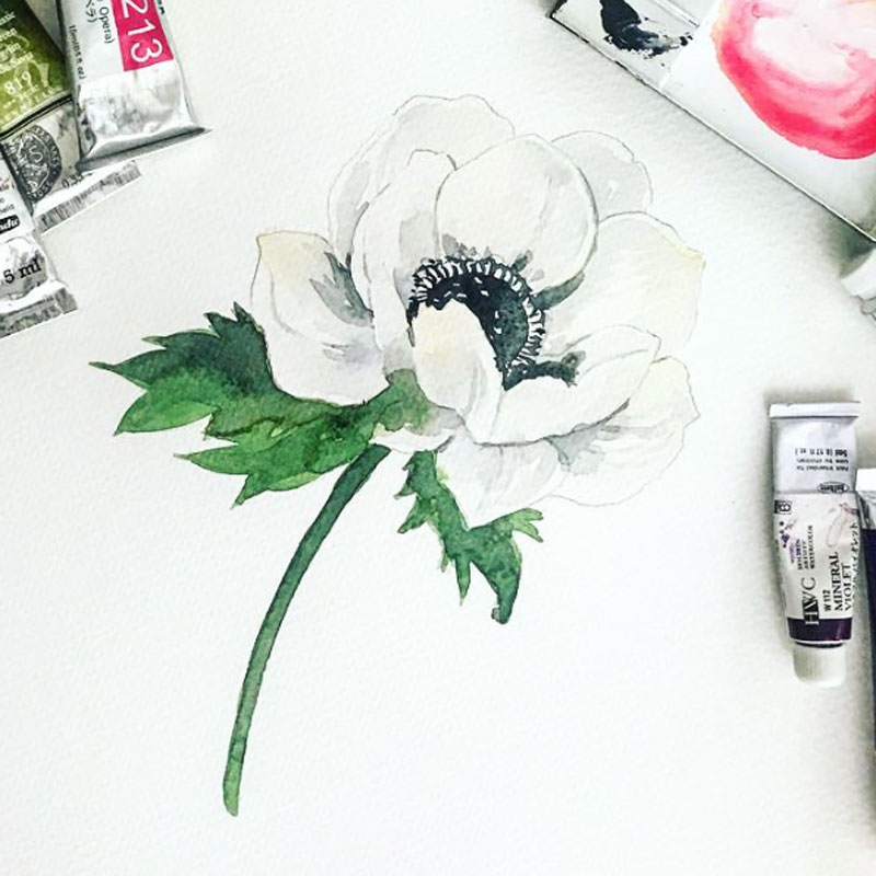 白アネモネの水彩画