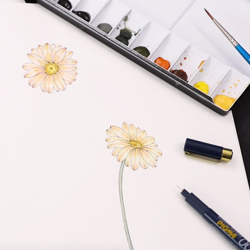 Watercolor Illustrations: Daisies