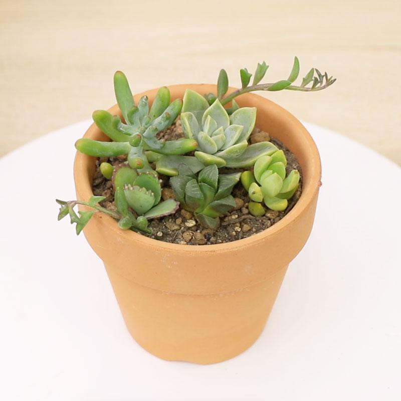 多肉植物の寄植えとは -はじめての寄植えを作ってみよう-