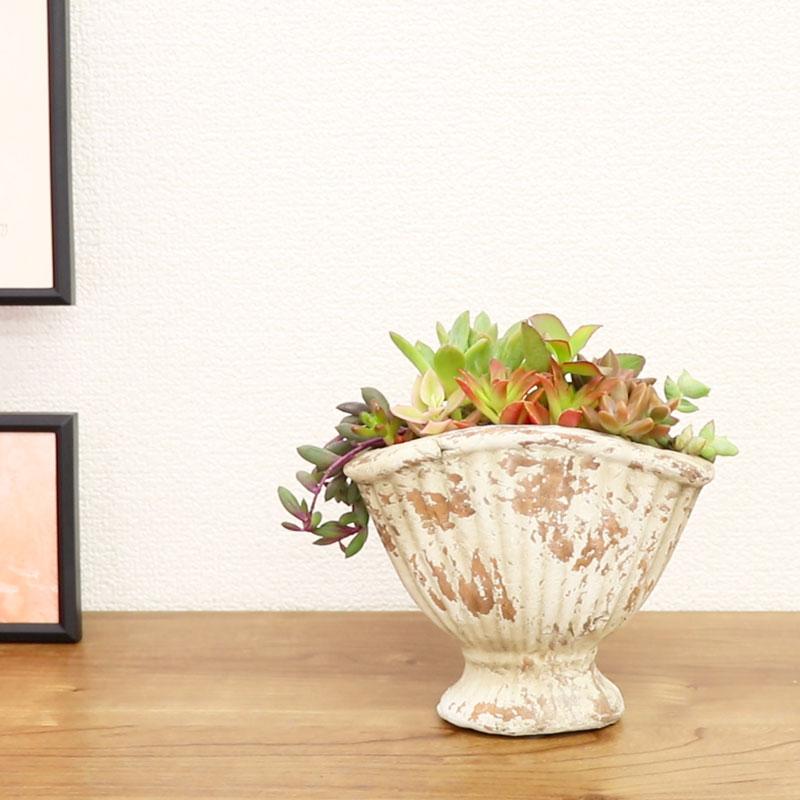 寄植え応用編 玄関に飾る寄植えを作ってみよう
